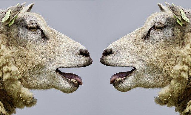 Die Kunst guter Delegation Was spricht gegen Delegation? Zwei Schafe