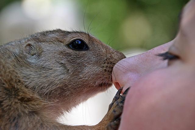 Vertrauen und Technik- die Eckpfeiler in Krisenzeiten Mädchen Frau mit Eichhörnchen